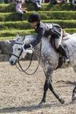 Horse winner Stock Photo