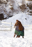 Horse in a winter Royalty Free Stock Images