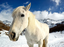 Horse winter Stock Image