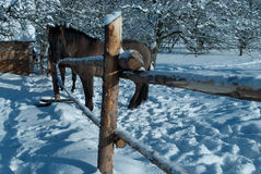 Horse in the winter Stock Photo