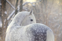 Horse in winter Royalty Free Stock Images