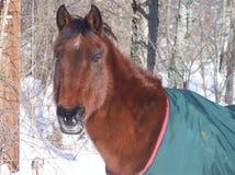 Horse in winter Stock Photos