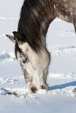 Horse in winter Stock Image
