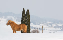 Horse winter Royalty Free Stock Photos