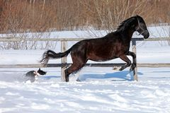 Horse in winter. On the farm Stock Photography