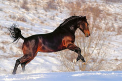 Horse in winter field