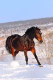 Horse in winter field Stock Photo
