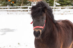 Horse on the winter field Royalty Free Stock Photo