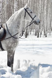 Horse in winter forest Stock Photo