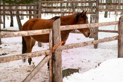 Horse in winter forest Stock Photos
