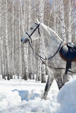 Horse in winter forest Stock Photography