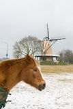 Horse in winter landscape Royalty Free Stock Photos