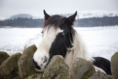 Horse in winter landscape Stock Images