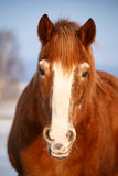Horse in winter Royalty Free Stock Photography