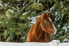 Horse in winter time. Royalty Free Stock Photos