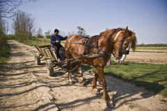 Horse With Carriage Royalty Free Stock Image