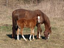 Free Horse With Foal Stock Photos - 13719683