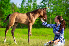 Horse and woman. Horses and woman in nature at summer Stock Photos