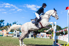 Equestrian Horse White Woman Upright Jump Stock Image