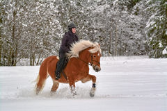 Horse and woman in winter Royalty Free Stock Images