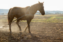 Horse work the land Stock Images