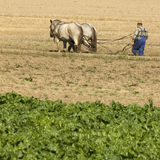 Horse working in the field Royalty Free Stock Photo
