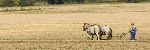 Free Horse Working In The Field Royalty Free Stock Photo - 6855265