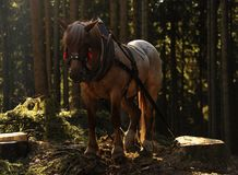 Horse working Royalty Free Stock Image