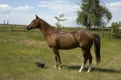 Horse on Wyoming Landscape Stock Photo