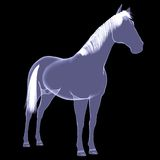 Horse. The X-ray render Royalty Free Stock Images