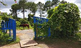 Horse in the yard in Vinales‬ Cuba. With blue gate Stock Photo