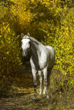 Horse in yellow leaves Royalty Free Stock Images