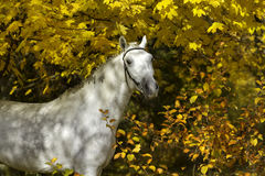 Horse in yellow leaves Stock Images