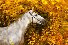 Horse in yellow leaves royalty free stock photos