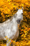 Horse in yellow leaves Royalty Free Stock Image