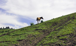 A horse in Yili prarie Royalty Free Stock Photography