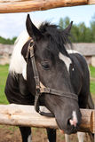 Horse in your corral Stock Images
