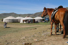 Horse and yurts Stock Images