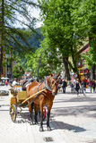 Horse in Zakopane at Krupowki street Stock Photos
