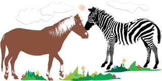 Horse and zebra in the meadow Stock Image