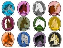 Horse zodiac Royalty Free Stock Images