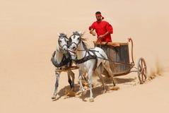 horse1 arkivfoto