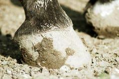 horse6 Стоковые Изображения