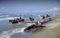 Horseas in beach. And sea Stock Images