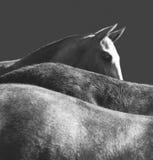 horseback imagenes de archivo