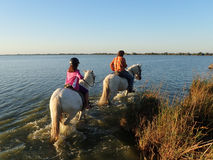 On horseback in the Camargue area, France Stock Photo