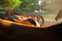 Horseback Stock Photo