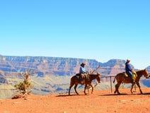 Horseback het berijden Stock Foto