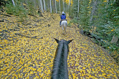 Horseback het Berijden Stock Fotografie