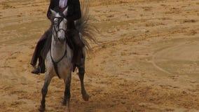 Horseback het Berijden, Paarden, Dieren stock footage